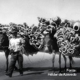 transporte-cortica